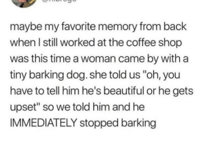 "Beautiful, Coffee, and Time: maybe my favorite memory from back  when l still worked at the coffee shop  was this time a woman came by with a  tiny barking dog. she told us ""oh, you  have to tell him he's beautiful or he gets  upset"" so we told him and he  IMMEDIATELY stopped barking wholesome bork boi"