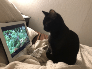 Mayhem had dental surgery today and is stoned out of her gourd. She has been sitting here, calmly watching bird videos on YouTube for literally hours.: Mayhem had dental surgery today and is stoned out of her gourd. She has been sitting here, calmly watching bird videos on YouTube for literally hours.