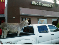 saw a guy hauling ass in the mcdonalds drive through: McDonalds saw a guy hauling ass in the mcdonalds drive through
