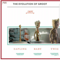 Groot evolution nerd geek ironman captainamerica spiderman thor hulk mcu disney guardiansofthegalaxy marvel groot pokemon dc batman superman justiceleague starwars anime WonderWoman thewalkingdead: MCU  THE EVOLUTION OF GROOT  SWIPE  SAP LING  BABY  GUARDIANS  GUARDIANS  TAGALAXY  GALAXY  TWIG  GUARDIANS Groot evolution nerd geek ironman captainamerica spiderman thor hulk mcu disney guardiansofthegalaxy marvel groot pokemon dc batman superman justiceleague starwars anime WonderWoman thewalkingdead