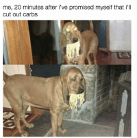 Memes, 🤖, and Tried: me, 20 minutes after i've promised myself that i'll  cut out carbs I tried.