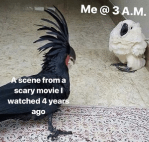 Dank, Memes, and Target: Me a 3 A.M  A scene froma  scary movie l  watched 4 years  ago Meirl by bigboyjohnsom02 MORE MEMES