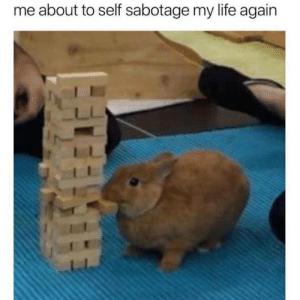 anxietyproblem:  Follow us @anxietyproblem: me about to self sabotage my life again anxietyproblem:  Follow us @anxietyproblem
