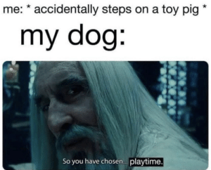 youlovetoseeit:  a mistake: me: * accidentally steps on a toy pig  my dog:  So you have chosen. playtime. youlovetoseeit:  a mistake
