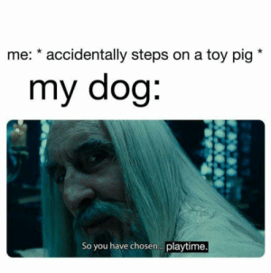 he's a good boi!: me: * accidentally steps on a toy pig  my dog:  So you have chosen. playtime. he's a good boi!