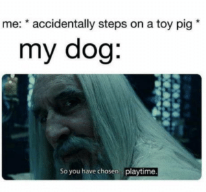 W..oof: me: * accidentally steps on a toy pig  my dog:  So you have chosen. playtime. W..oof