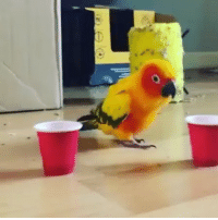 Me after 1 cup of coffee. Credit: @cheetothesunconure: Me after 1 cup of coffee. Credit: @cheetothesunconure
