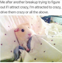 Crazy, Drive, and Girl Memes: Me after another breakup trying to figure  out if I attract crazy, I'm attracted to crazy,  drive them crazy or all the above All of the above 😩