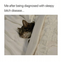 Bitch, Funny, and Zero: Me after being diagnosed with sleepy  bitch disease. I need a nap right meow @zero_fucksgirl 😽💤 Creds: @tatum.strangely