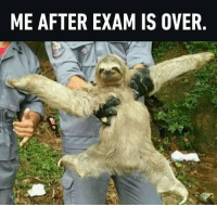 Memes, Sloth, and 🤖: ME AFTER EXAM IS OVER I get through it fabulously! Follow @9gag @9gagmobile 9gag sloth