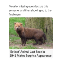 They found me 😅: Me after missing every lecture this  semester and then showing up to the  final exam  Extinct' Animal Last Seen in  1941 Makes Surprise Appearance They found me 😅