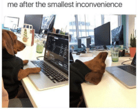 Inconvenience, Time, and Check: me after the smallest inconvenience Time to check out.
