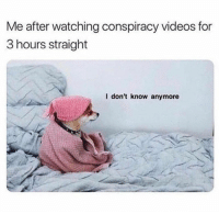 Dogs, Funny, and Memes: Me after watching conspiracy videos for  3 hours straight  l don't know anymore Whether it's work or studying for a final, we've created this list to distract you and prolong the inevitable. You're welcome. #funny dogs # dogs # memes # funny memes # dog memes