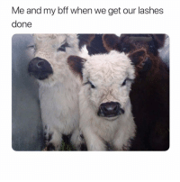 Girl Memes, Bff, and Get: Me and my bff when we get our lashes  done