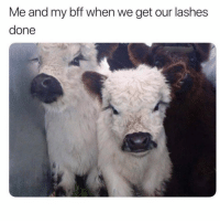 Funny, Memes, and Bff: Me and my bff when we get our lashes  done SarcasmOnly