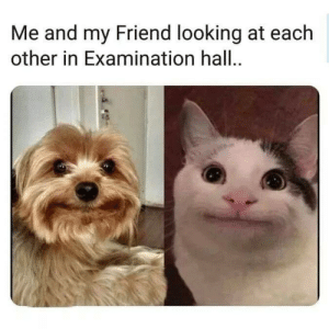 Examination: Me and my Friend looking at each  other in Examination hall.