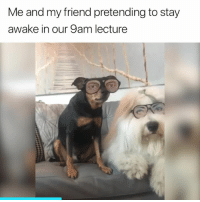 Friend, Awake, and Stay: Me and my friend pretending to stay  awake in our 9am lecture Accurate 😅
