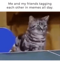 Friends, Funny, and Memes: Me and my friends tagging  each other in memes all day. Follow me @hilarious.ted for more animal memes