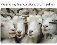 60 Funny Animals Memes For You If You Desperately Need A Laugh: Me and my friends taking drunk selfies 60 Funny Animals Memes For You If You Desperately Need A Laugh