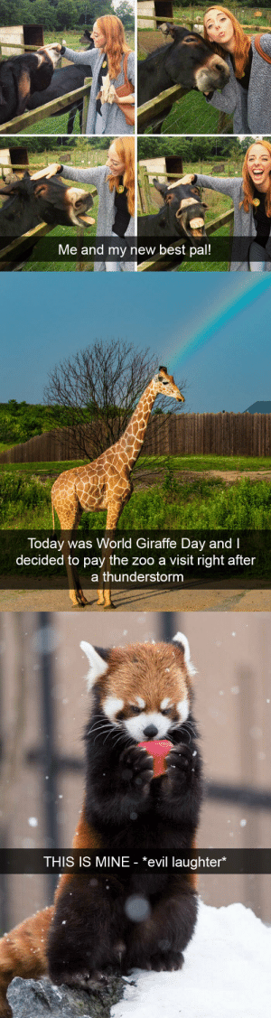 Target, Tumblr, and Animal: Me and my new best pal!   Today was World Giraffe Day and I  decided to pay the zoo a visit right after  a thunderstorm   THIS IS MINE - *evil laughter* animalsnaps:Animal snaps