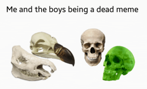 Dank, Dogs, and Meme: Me and the boys being a dead meme That's right female dogs, I'm still posting these memes! by stephansbrick MORE MEMES