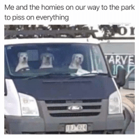 Same @doggosdoingthings: Me and the homies on our way to the park  to piss on everything  @cabbagecatmemes  ARVE  in  BJ 024 Same @doggosdoingthings