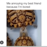 Best Friend, Bored, and Memes: Me annoying my best friend  because I'm bored I miss the shell out of you