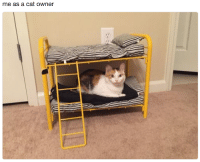 Cat Owner: me as a cat owner
