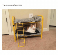 Tag a crazy cat lady: me as a cat owner Tag a crazy cat lady