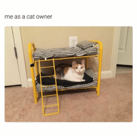 Crazy, Funny, and Ted: me as a cat Owner Tag a crazy cat lover (@hilarious.ted)
