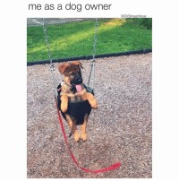"""Low Key, Memes, and 🤖: me as a dog Owner  @Drsmashlove (@yourfavoriteexgf) Do puppers like this tho(?) Low key lil homie got that expression on his face like """"Y u do dis"""". 😫😂😂😂"""
