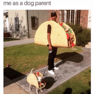 Dog, Parent, and Literally: me as a dog parent  19 Literally me.
