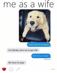 Cute, Dogs, and Memes: me as a wife  Look I got us a puppy!  You literally went out to get milk  But he's so cute!  Delivered  We have 23 dogs positive-memes:  This feels accurate