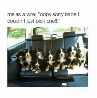 """Memes, Sorry, and Wife: me as a wife: """"oops sorry babe l  couldn't just pick one!!!"""""""
