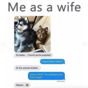 Animals, Dogs, and Jesus: Me as a wife  So babe... I found some puppies!  Found them where?  At the animal shelter.  Jesus Christ. You adopted two  more dogs?  Delivered  Maybe... Dog Memes Of The Day 32 Pics – Ep52 #animalmemes #dogmemes #memes #dogs - Lovely Animals World
