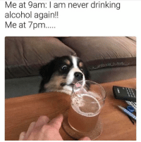Me at 9am: am never drinking  alcohol again!!  Me at 7pm... @x__antisocial_butterfly__x is a meme guru