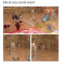 *shows up to party* *says hello to everyone and pretends to be thrilled to be there* *finds cozy bathroom where I can look at memes and be antisocial ☺️* 😂😂😂: Me at any social event  @DrSmashlove *shows up to party* *says hello to everyone and pretends to be thrilled to be there* *finds cozy bathroom where I can look at memes and be antisocial ☺️* 😂😂😂
