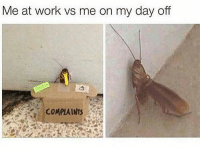 Dank, Work, and Day: Me at work vs me on my day off It me