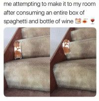Cute, Funny, and Memes: me attempting to make it to my room  after consuming an entire box of  spaghetti and bottle of wine 3 42 Cute Animal Memes That Never Stop Being Funny