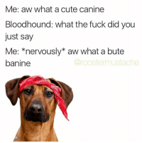 Me: aw what a cute canine  Bloodhound: what the fuck did you  just say  Me: *nervously* aw what a bute  Crooste mustache  banine Snapchat : dankmemesgang