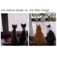 Ass, Bruh, and Chipotle: me before break vs. me after break  @DrSmashlove When y'all eat like a fat ass do y'all ever see yourself get really, really good at math? Like hold up...three Oreos...seven grams of fat...I just ate 20...lemme make it a round 21 ☺️...divided by three...times seven...oh wow...49 grams of fat? Smash u wild Bruh...u just ate a damn Big Mac and large fries worth of Oreos...and u ain't even full...matter fact u hungry...wait is Chipotle open? Let's call this a cheat meal ... day ... week ... holiday ... month ... year ... cheat year? Ayeeee let's agree 2016 was a cheat year. It's aight doe ... we'll eat better in 2017 😒😒😒😂😂😂