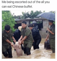 Chinese, British, and The All: Me being escorted out of the all you  can eat Chinese buffet  @svagel Same 🐷🐷🐷 @memezar is my favourite page on IG