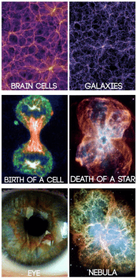 """Target, Tumblr, and Blog: ME  BRAIN CELLSGALAXIES   BIRTH OF A CELL DEATH OF A STAR   EYE  NEBULA <p><a class=""""tumblr_blog"""" href=""""http://snime.tumblr.com/post/142282403685"""" target=""""_blank"""">snime</a>:</p> <blockquote> <p><a class=""""tumblr_blog"""" href=""""http://tobeagenius.tumblr.com/post/136537395655"""" target=""""_blank"""">tobeagenius</a>:</p> <blockquote> <blockquote><p><i><b>""""You are the universe, expressing itself as a human for a little while""""</b></i></p></blockquote> </blockquote> <p><figure class=""""tmblr-full"""" data-orig-height=""""718"""" data-orig-width=""""600""""><img src=""""https://78.media.tumblr.com/0f6385de114d2965118a3a51a3b19102/tumblr_inline_o55dukEOeD1qde01i_540.jpg"""" data-orig-height=""""718"""" data-orig-width=""""600""""/></figure></p> </blockquote>"""