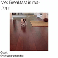 Food, Memes, and Breakfast: Me: Breakfast is rea-  Dog:  @bark  Dyahtzeethefrenchie Me when I see food @yahtzeethefrenchie