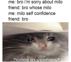 2meirl4meirl: me: bro i'm sorry about milo  friend: bro whose milo  me: milo self confidence  friend: bro  *cries in yeehaw* 2meirl4meirl