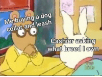 Memes, Asking, and 🤖: Me buying a dog  collar and leash  Cashier asKinG  what  breed I @  wn Umm they're called Kinkster 😅