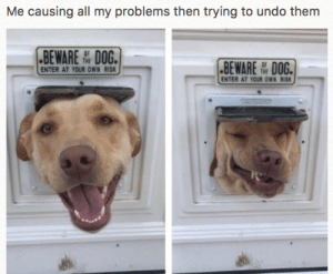 MeIRL, Dog, and Own: Me causing all my problems then trying to undo them  BEWAREDOG.  BEWARE DOG.  ENTER AT YOUR OWN RISK  ENTER AT YOUR OWN RISK meirl