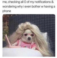 Memes, Phone, and 🤖: me, checking all O of my notifications &  wondering why i even bother w having a  phone 😒 Follow @thespeckyblonde @thespeckyblonde @thespeckyblonde @thespeckyblonde