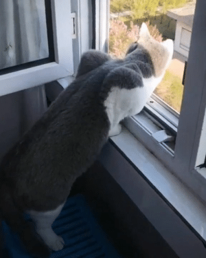 Dank, 🤖, and Can: Me checking if my relatives have left so I can finally go downstairs