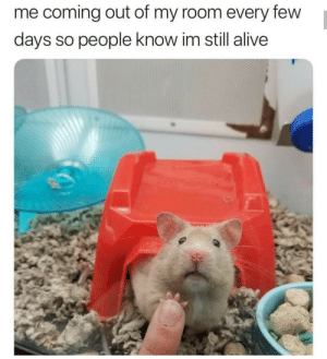 Alive, Dank, and Memes: me coming out of my room every few  days so people know im still alive meirl by PhantomFuck MORE MEMES